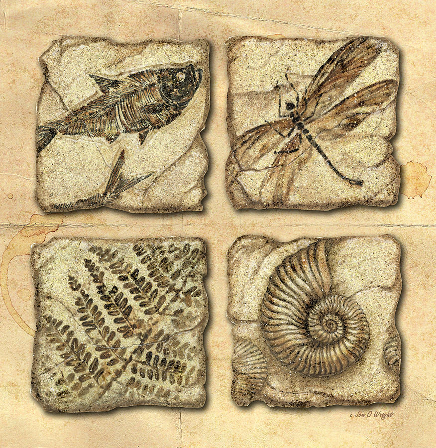Jon Q Wright Painting - Fossils by JQ Licensing