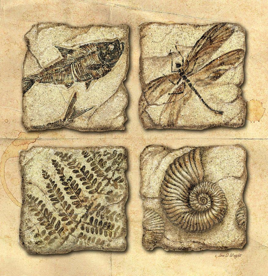 Snail Art | Fine Art America