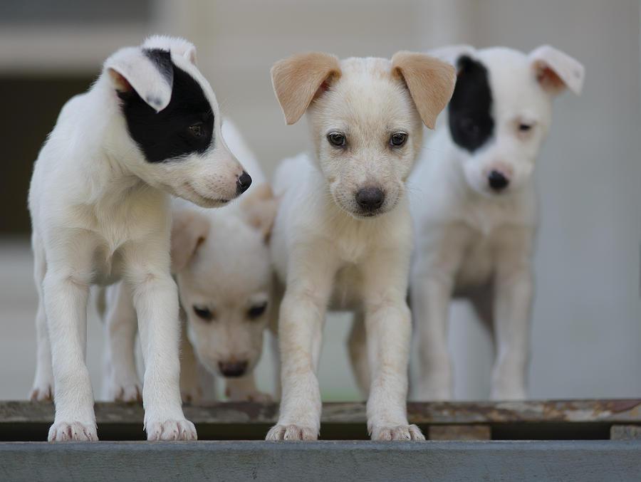 Foster Pups Photograph By Benita Walker