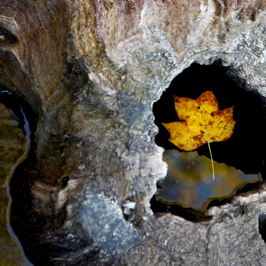 Leaf Photograph - Found A Home by Art Block Collections