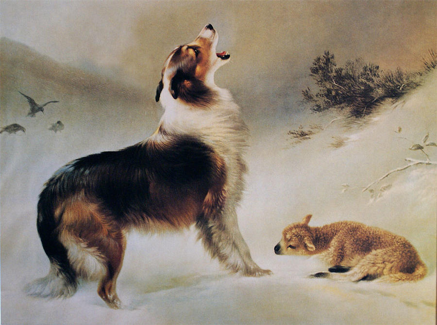 Collie Dog Painting - Found by Albrecht Schenck