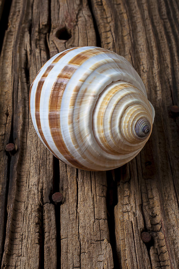 Sea Shell Photograph - Found Sea Shell by Garry Gay