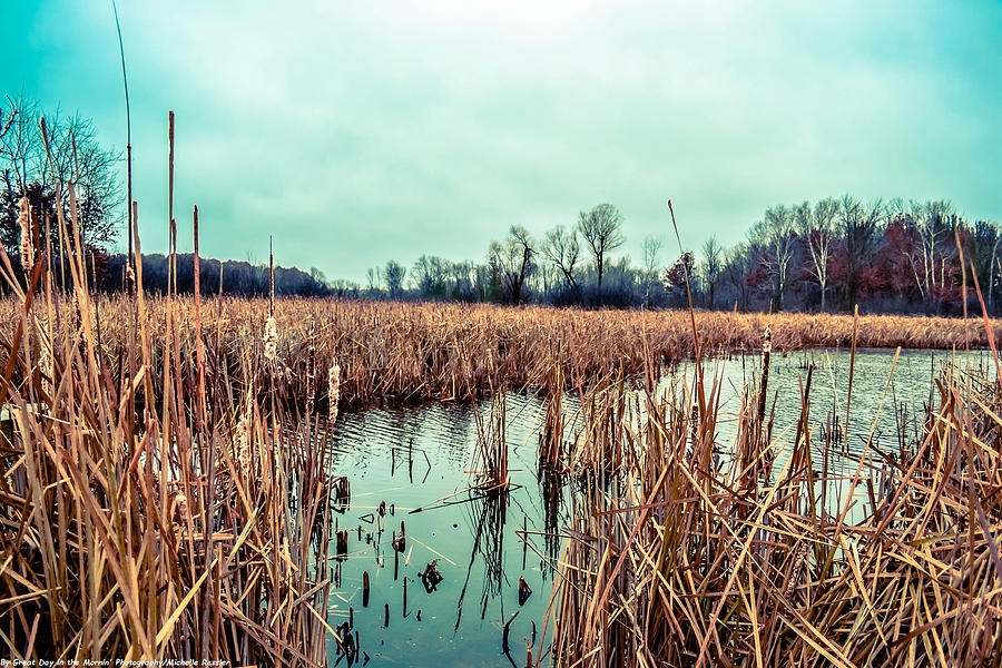 Wetlands Photograph - Four Corners Wetlands by Michelle Ressler