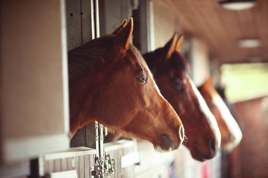 Four Horses In Stables Photograph by Olivia Bell Photography