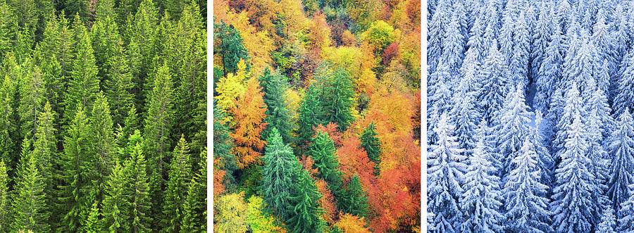 Four Season Forest Photograph by Borchee