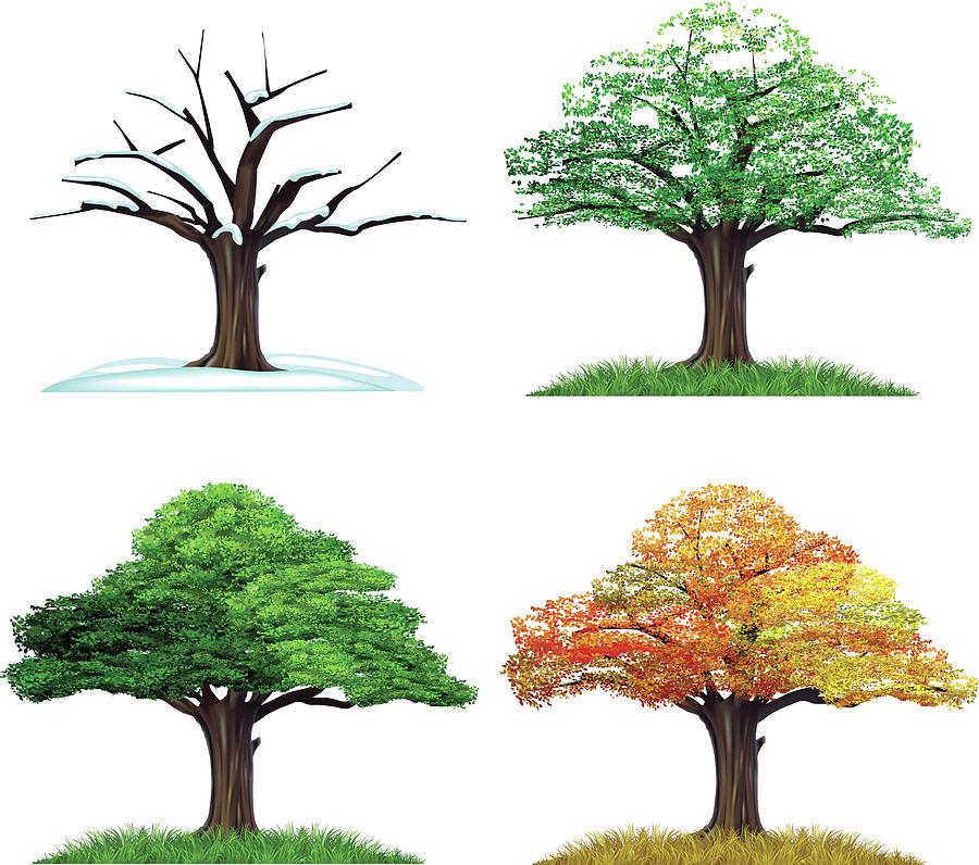 Four Season Tree Digital Art by Sceka