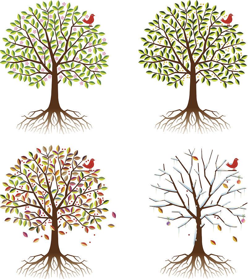 Four Seasons In One Tree Digital Art by Johnwoodcock