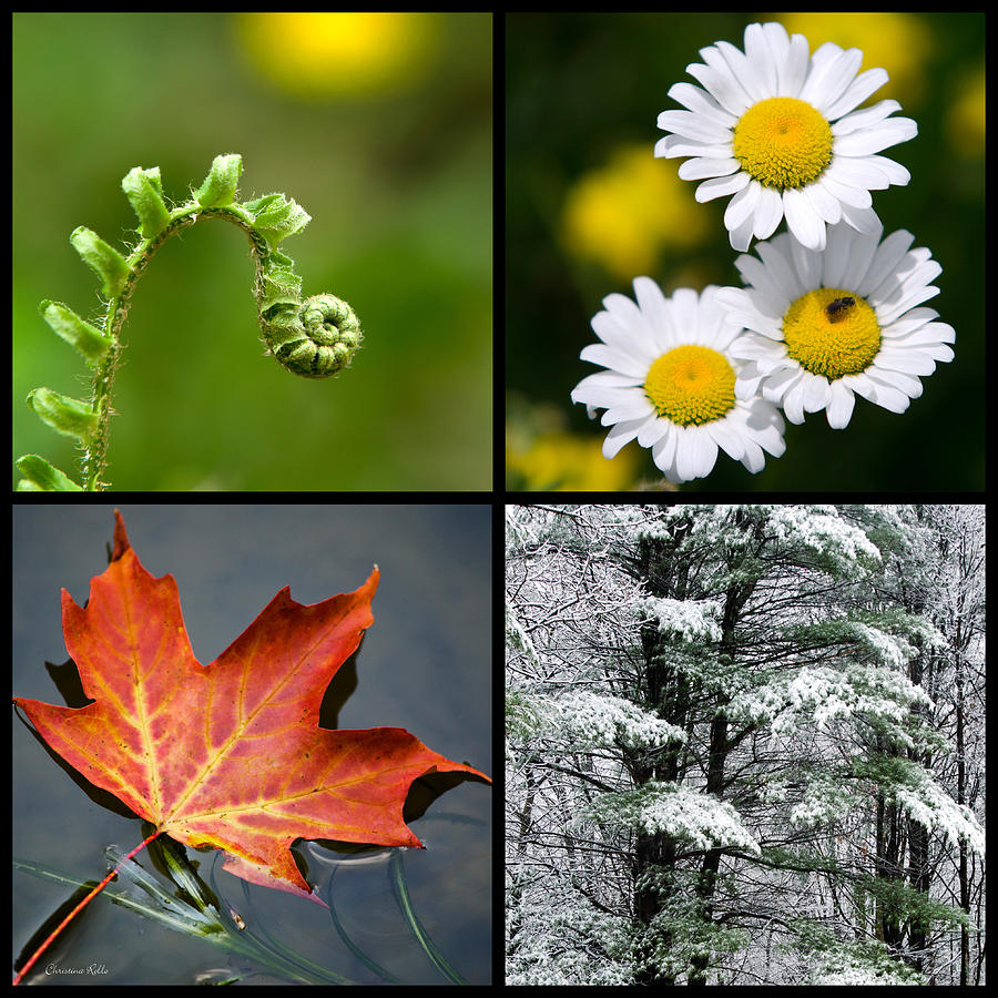 Beautiful Nature Collage Four Seasons Year Stock Photo 300076028 ...