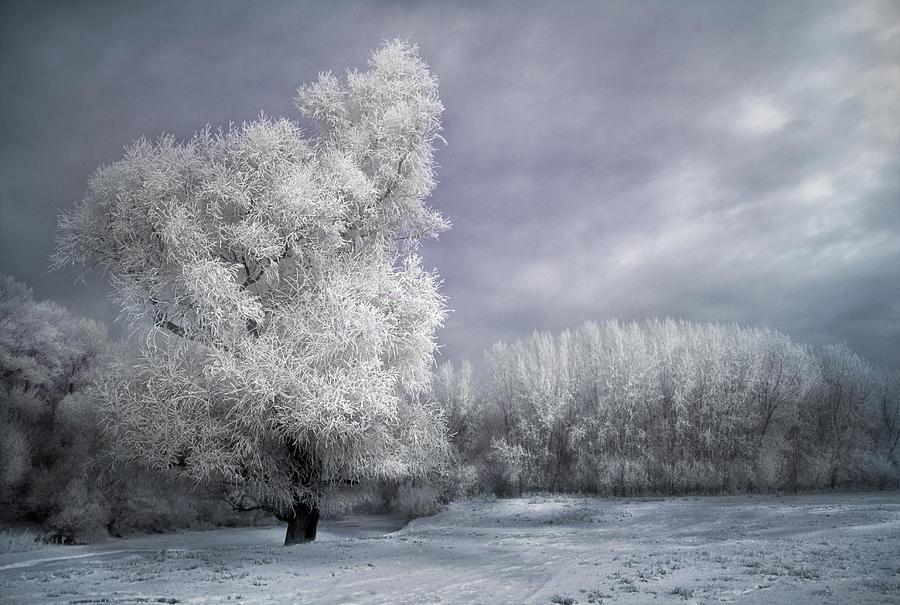 Winter Photograph - Four Seasons - Winter by Akos Kozari