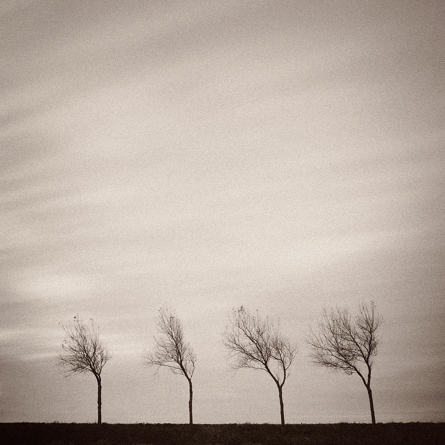 Trees Photograph - Four Trees by Dave Bowman