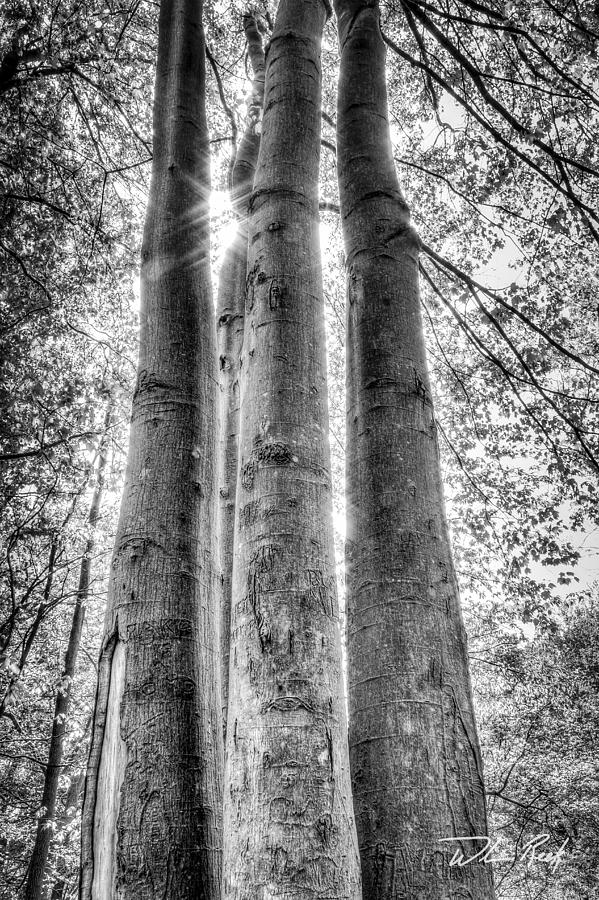 Tree Photograph - Four Trunks by William Reek