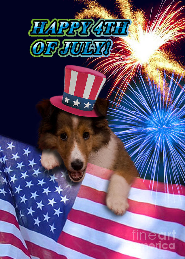 Cute Photograph - Fourth Of July Sheltie Puppy by Jeanette K