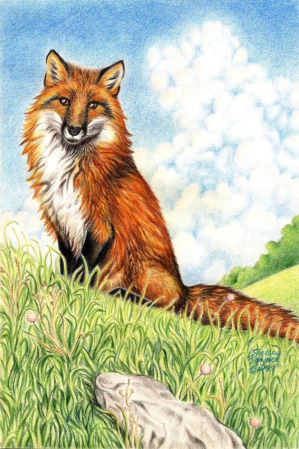 Fox Drawing - Fox in the Meadow by Shelley Shayner