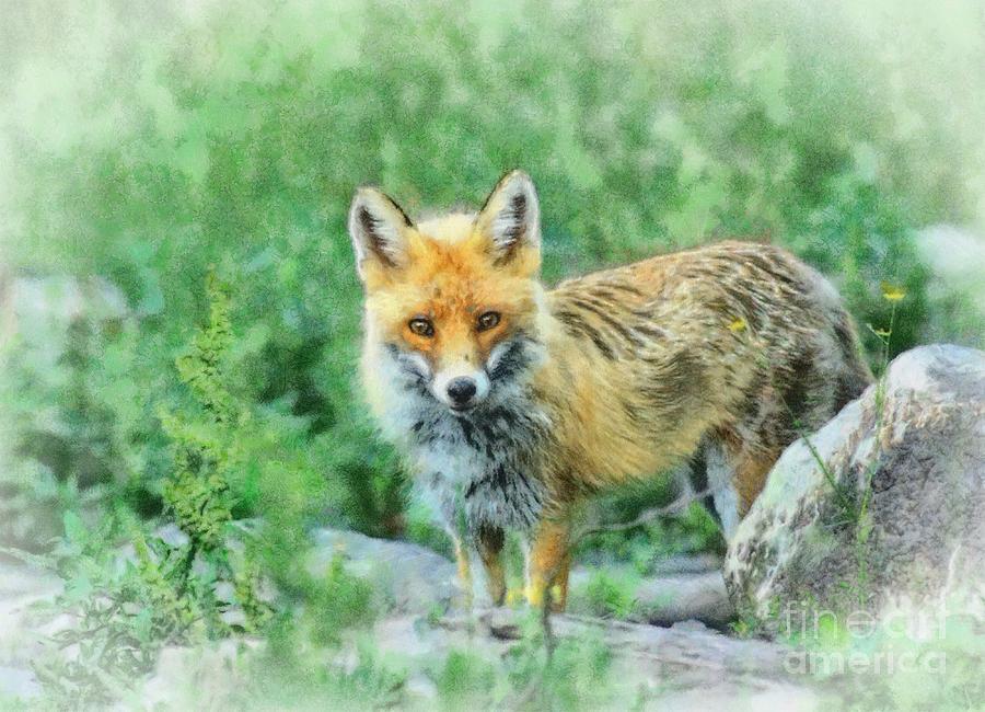 Animal Digital Art - Fox In The Rocks by Czesznak Zsolt