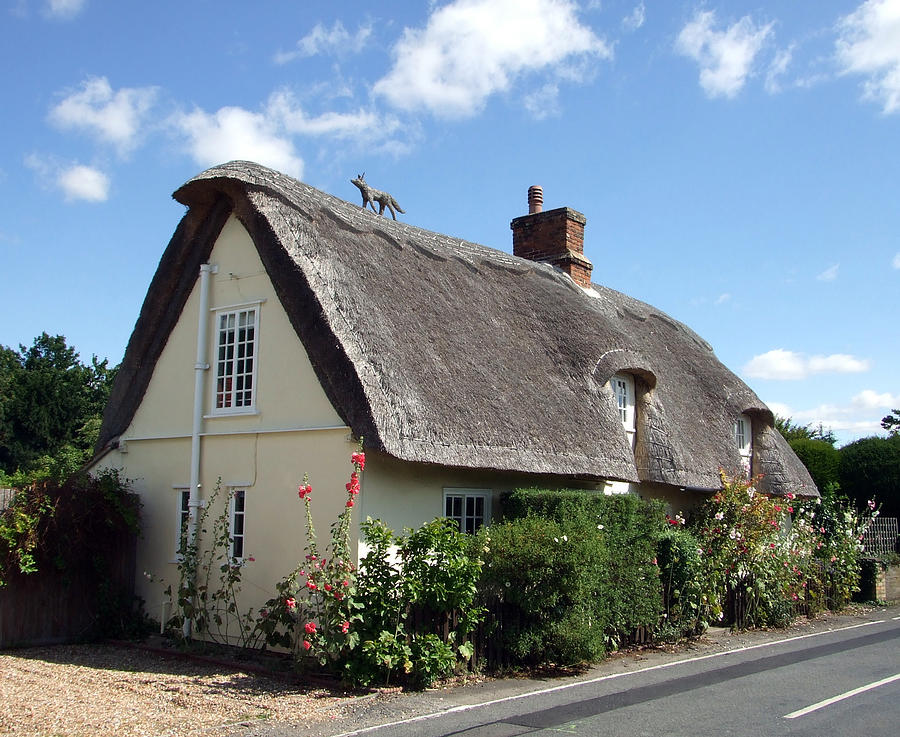 Thatch Photograph - Fox On The Roof by Richard Reeve