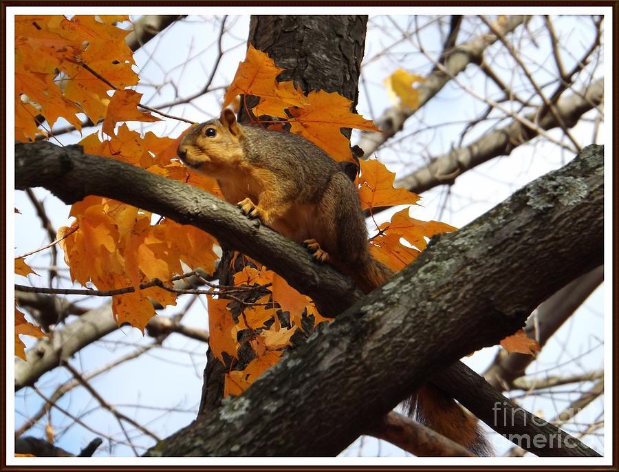 Squirrel Photograph - Fox Squirrel In Autumn by Sara  Raber