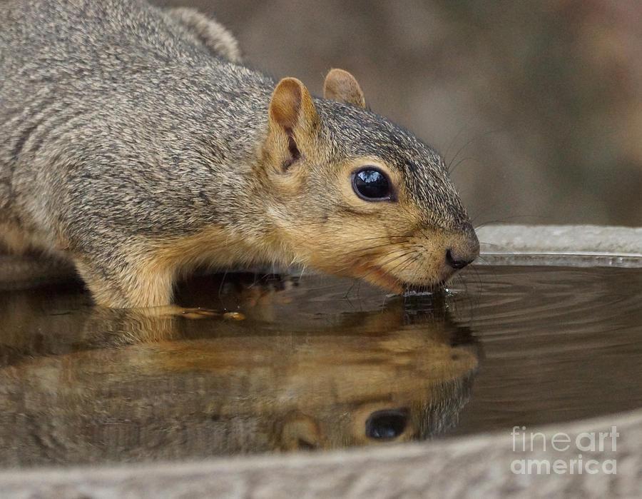 Squirrel Photograph - Fox Squirrel by Lori Tordsen