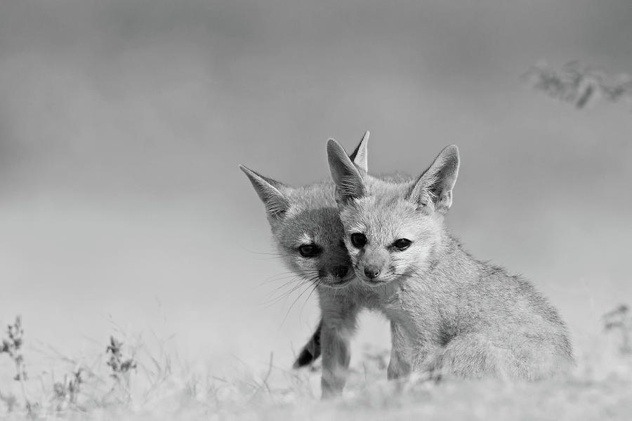 Fox Tits Photograph by Santanu Nandy