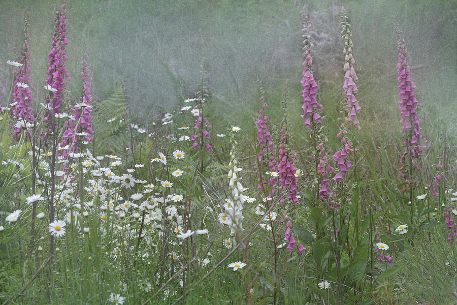 Foxglove Photograph - Foxgloves And Daisies by Angie Vogel