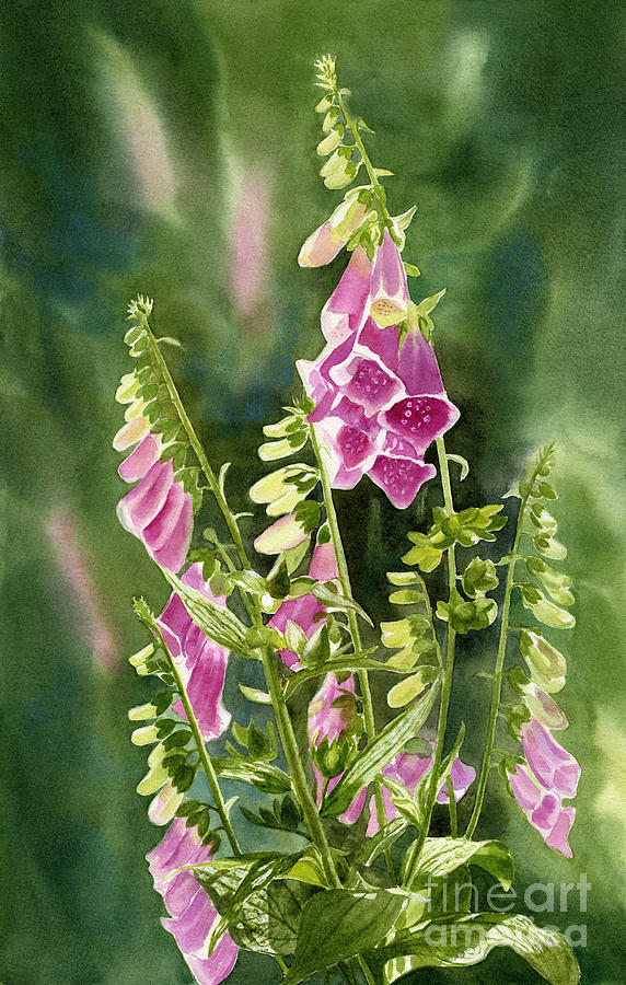 Foxgloves Painting - Foxgloves With Background by Sharon Freeman