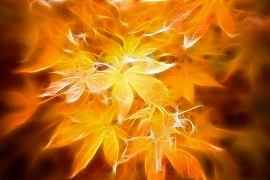 Color Photograph - Fractal Gold 6664 by Timothy Bischoff