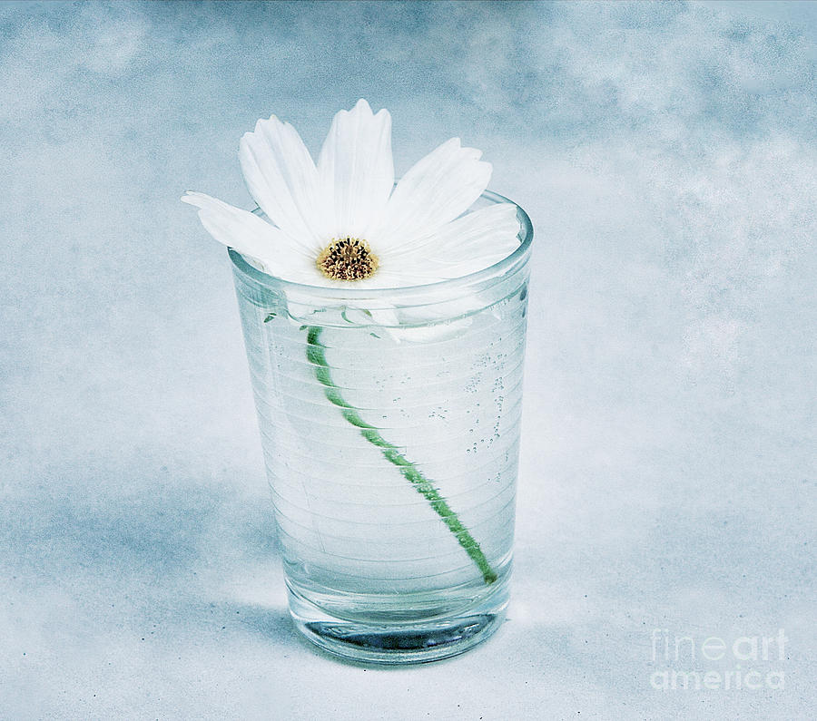 Still Life Photograph - Fragile by Angela Bruno