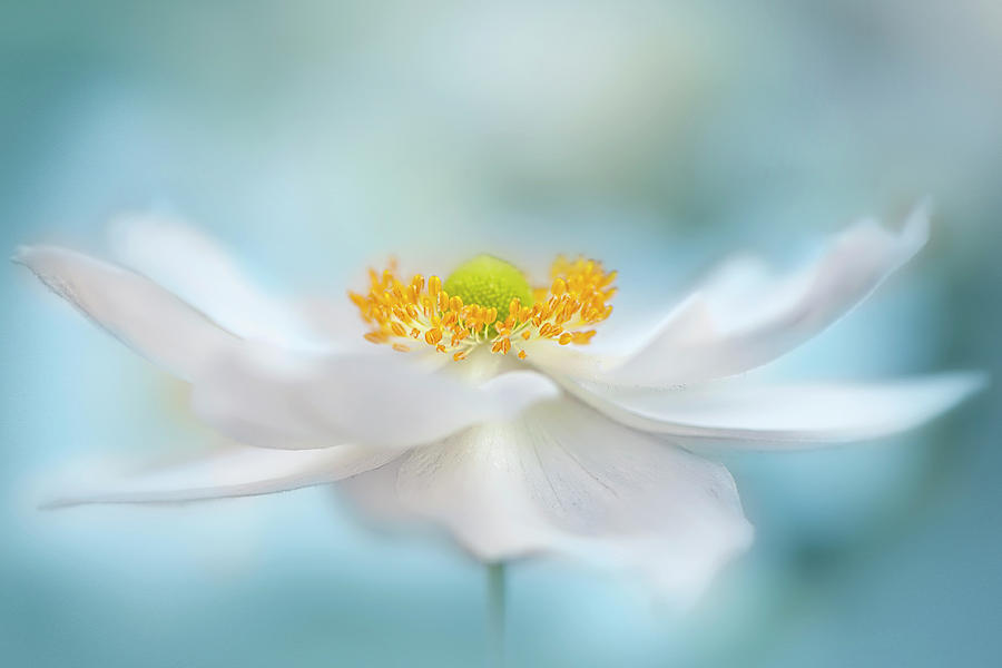 Flower Photograph - Fragility by Jacky Parker