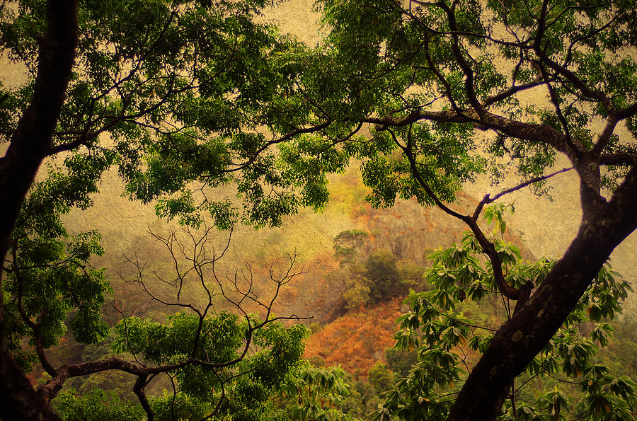 Nature Photograph - Framing Tree Branches by Jenny Rainbow