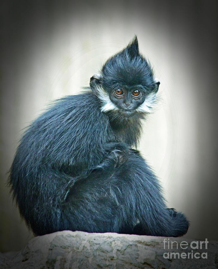 Francois Langur Monkey Photograph - Francois Langur Monkey II by Jim Fitzpatrick