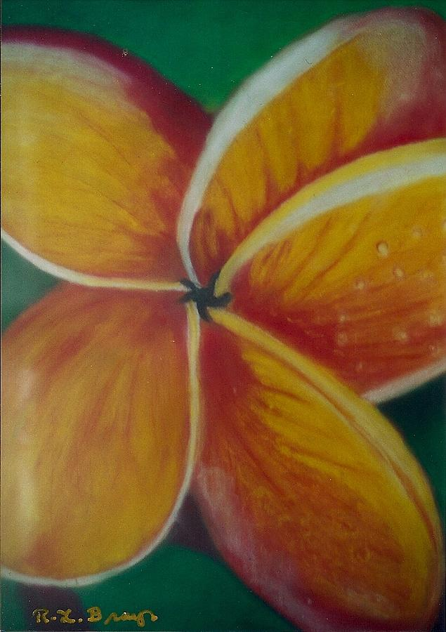 Frangipani Bloom Painting by Robert Bray