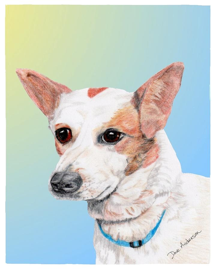 Dog Drawing - Freckles A Former Shelter Dog by Dave Anderson