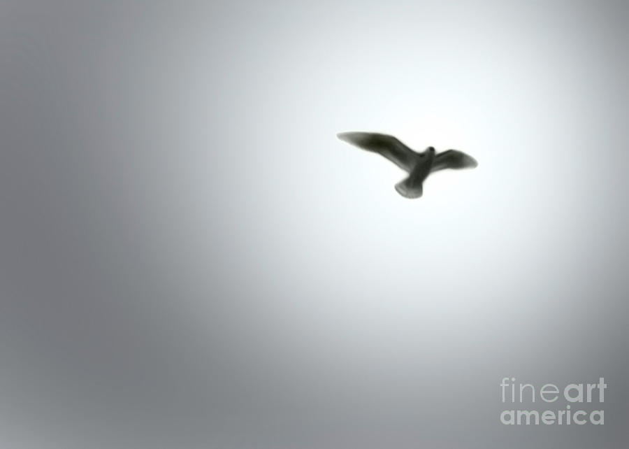 Dove Painting - Free Bird by Gregory Dyer
