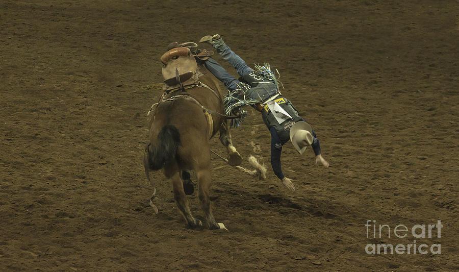 Horse Photograph - Free Falling by Janice Pariza