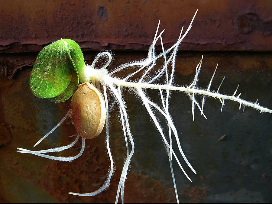Seeds Photograph - Free To Be by Shirley Sirois