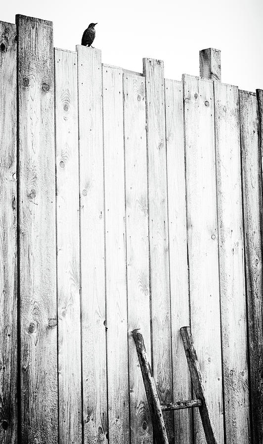 Plank Photograph - Freed by J?rgen Hartlieb