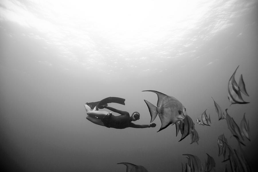 Freediving Photograph - Freediver And Batfish by One ocean One breath