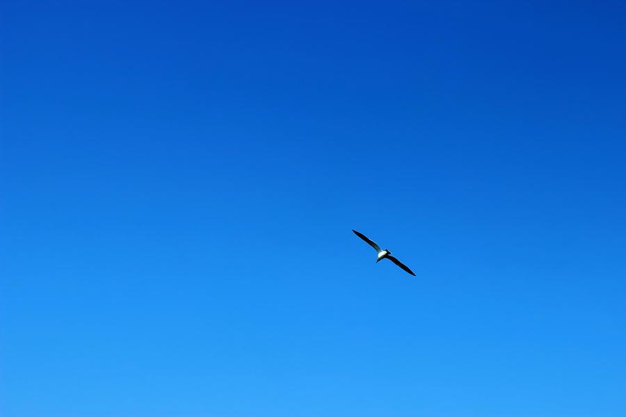 Sky Photograph - Freedom And Solitude by Phoresto Kim