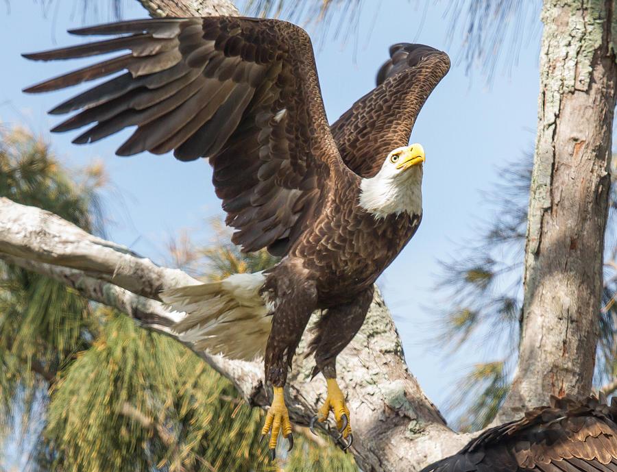 America Photograph - Freedom by Doug McPherson