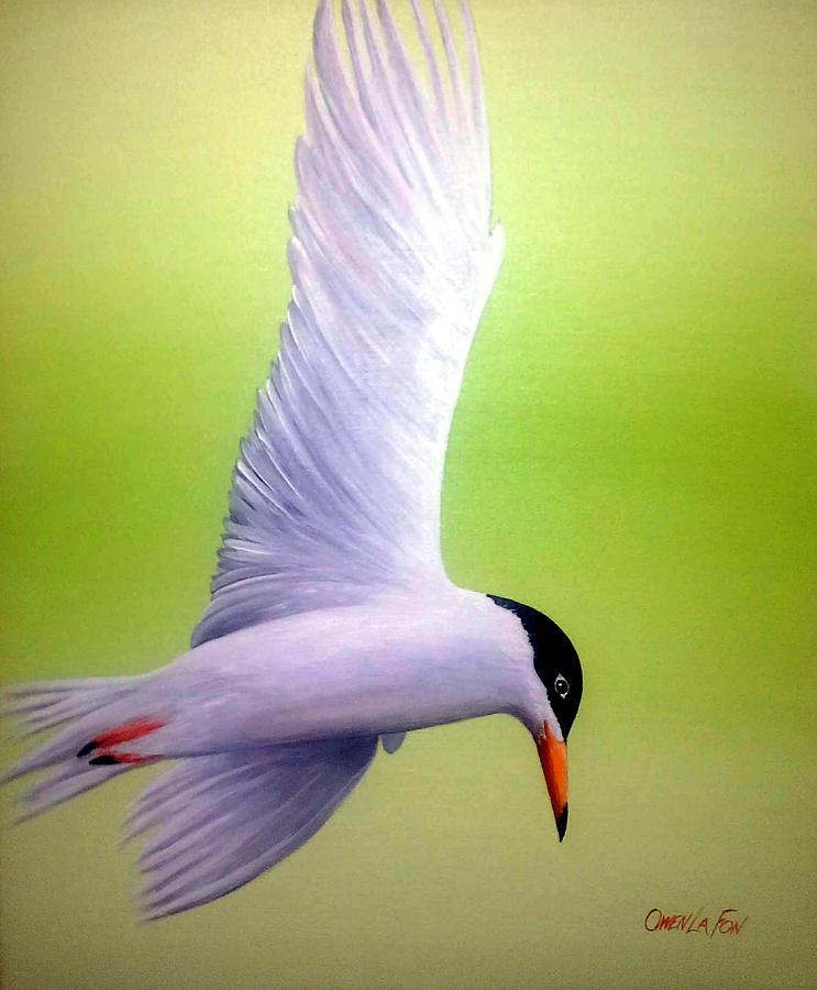 Freedom by Owen Lafon
