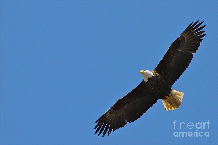 Eagle Photograph - Freedom by Rick  Monyahan