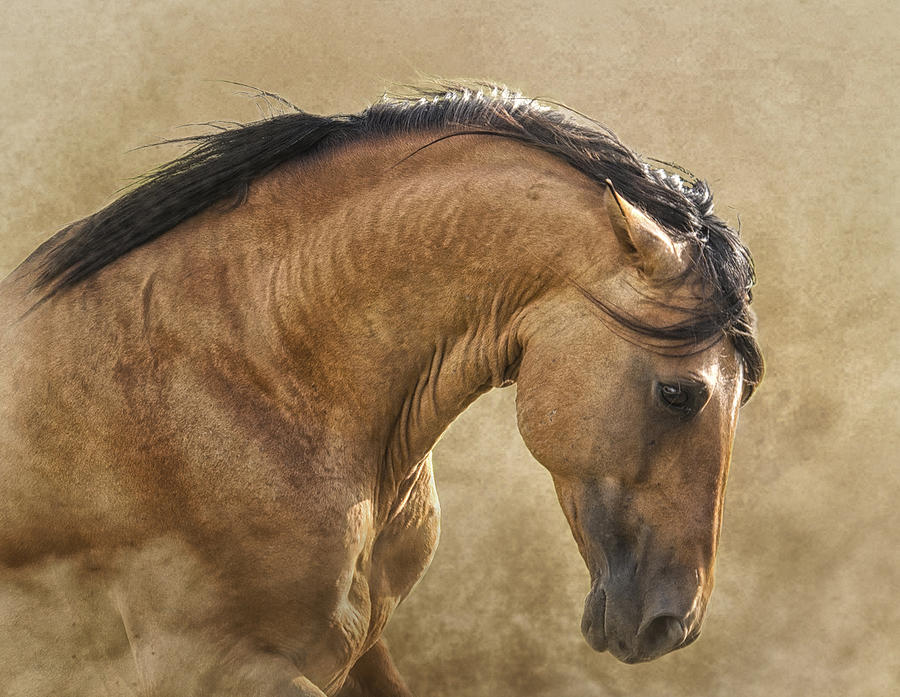 Horse Photograph - Freedom by Ron  McGinnis