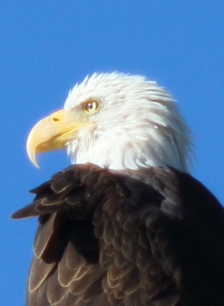 Eagle Photograph - Freedom Watch by Jeff Nelson