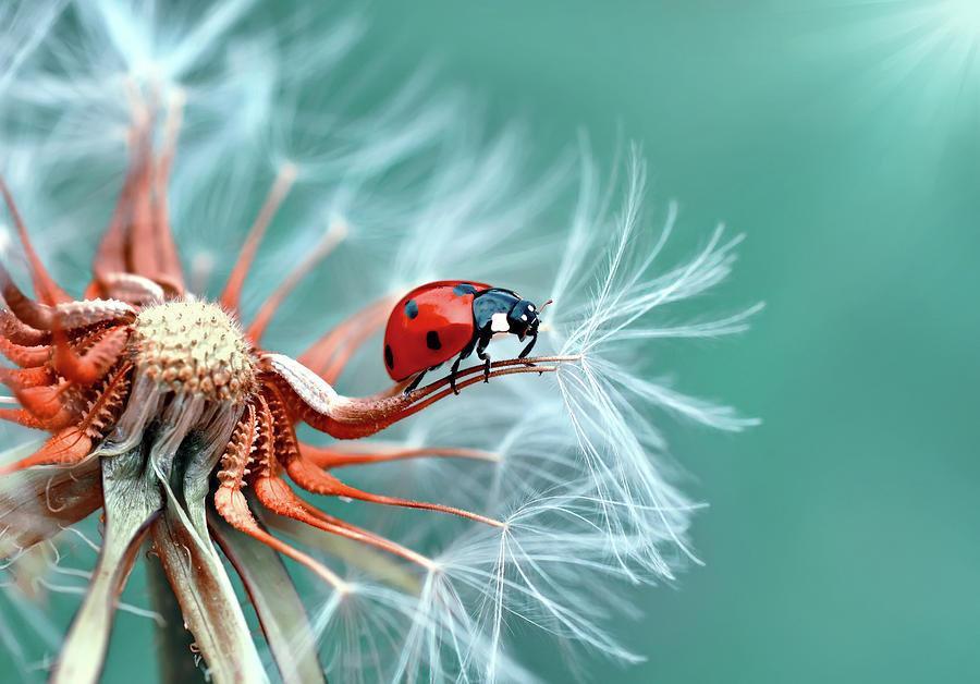 Ladybug Photograph - Freedoom by Mustafa ?zt?rk
