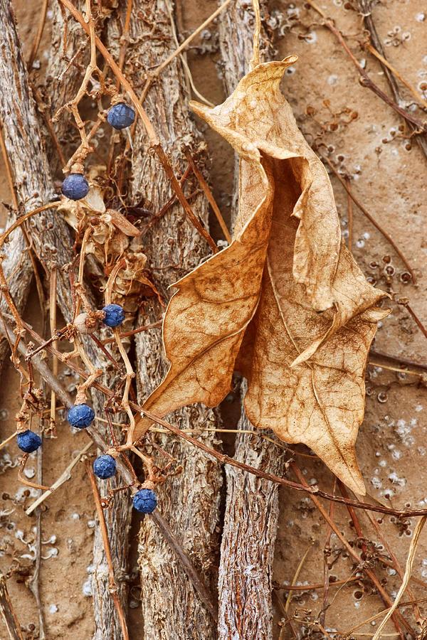 Autumn Photograph - Freeze Dried by Nikolyn McDonald