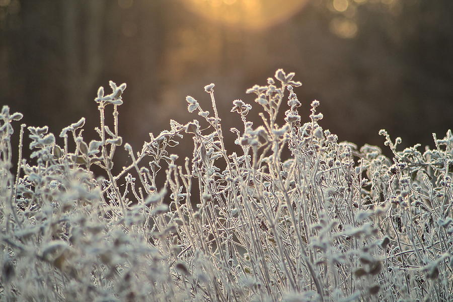 Foliage Photograph - Freezing Cold by Karen Grist