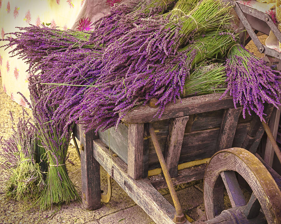 France Photograph - French Lavender Cart by Phyllis Peterson