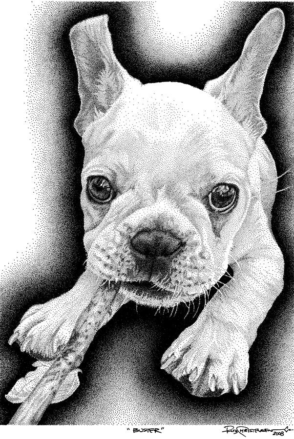 Frenchie Drawing - Frenchie by Rob Christensen