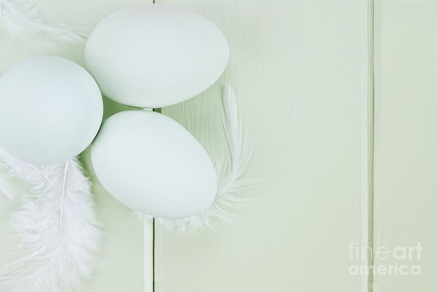 Egg Photograph - Fresh Ameraucana Eggs And Feathers by Stephanie Frey