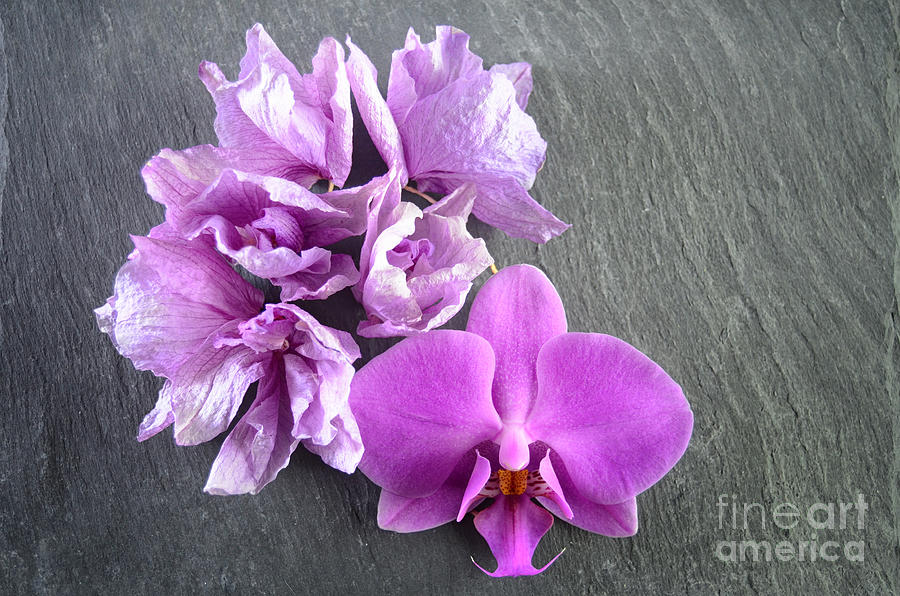 Fresh And Dried Orchids On Slate Photograph