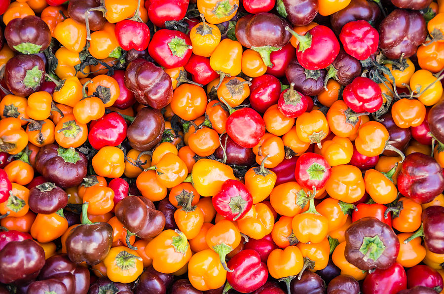 Agriculture Photograph - Fresh Colorful Hot Peppers by John Trax